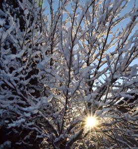 starbust snow