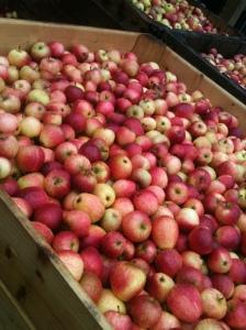 lotsa apples